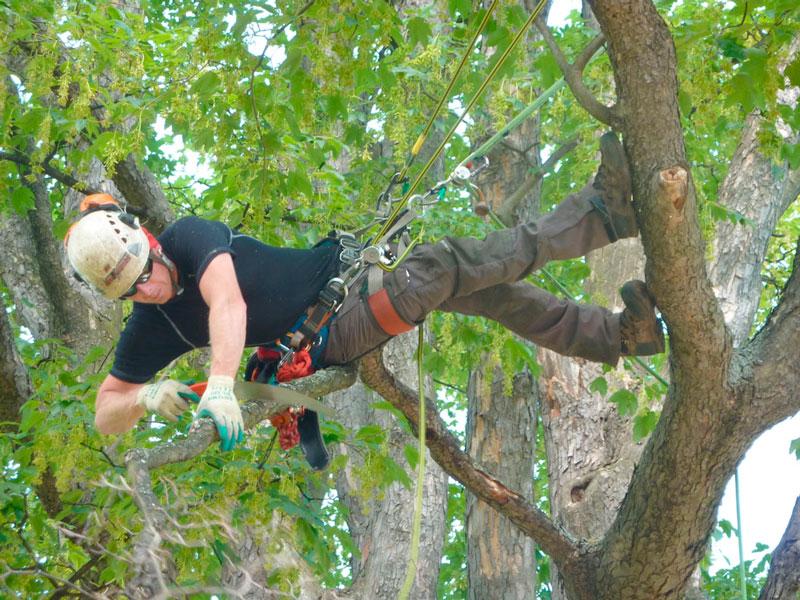 Baumpflege  Leistungen - Baumpflege für gesunde, bruchsichere Bäume